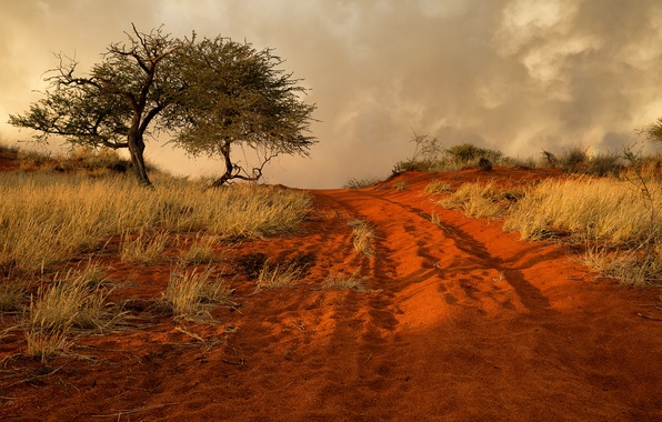 Picture road, sand, grass, tree, hills, Africa, Namibia