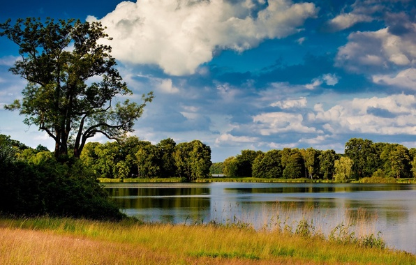 Picture the sky, grass, water, landscape, nature, river, tree