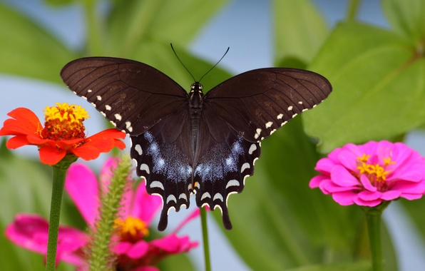 Picture flower, nature, butterfly, wings, insect, moth