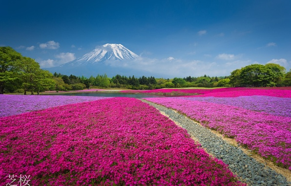 Picture forest, flowers, nature, lake, Park, mountain, the volcano, China, flowerbed
