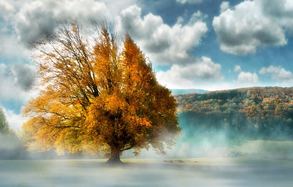 Picture landscape, fog, tree