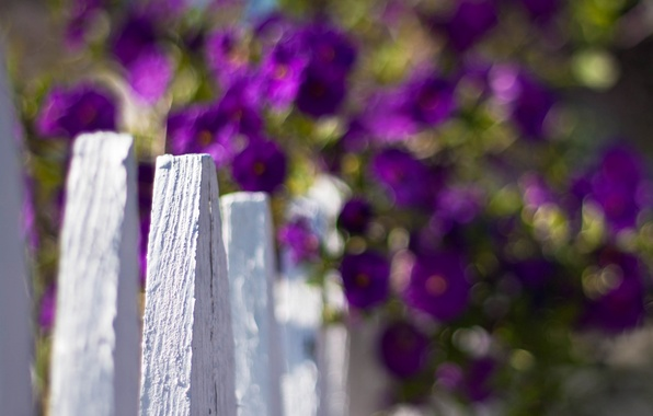 Picture white, purple, macro, flowers, background, widescreen, Wallpaper, the fence, blur, the fence, wallpaper, flowers, widescreen, …