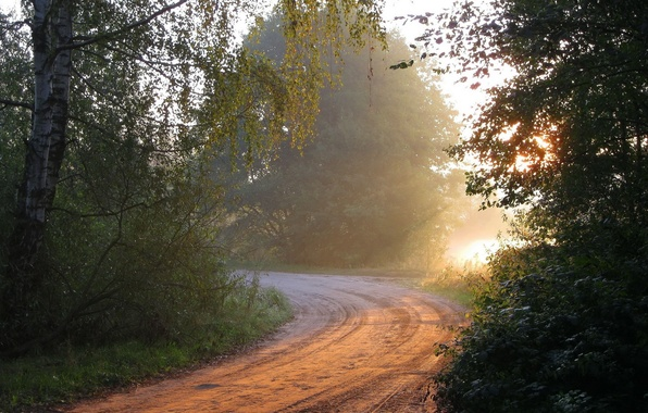 Picture road, forest, light, nature, morning