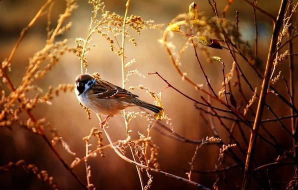 Picture macro, branches, bird, Sparrow