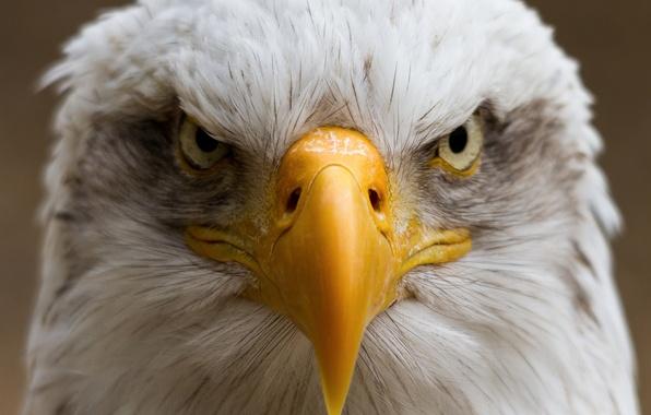 Picture bird, portrait, beak, eagle