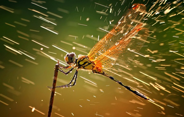 Picture drops, squirt, dragonfly