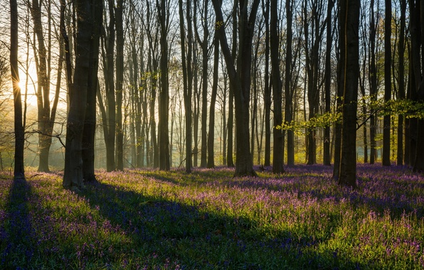 Picture forest, light, spring, morning