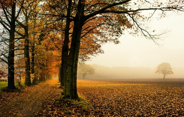 Picture autumn, leaves, trees, nature, background, tree, widescreen, Wallpaper, foliage, wallpaper, falling leaves, nature, widescreen, background, …