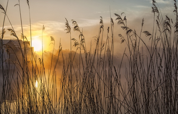 Picture the sky, grass, the sun, clouds, macro, sunset, river, plant, stem