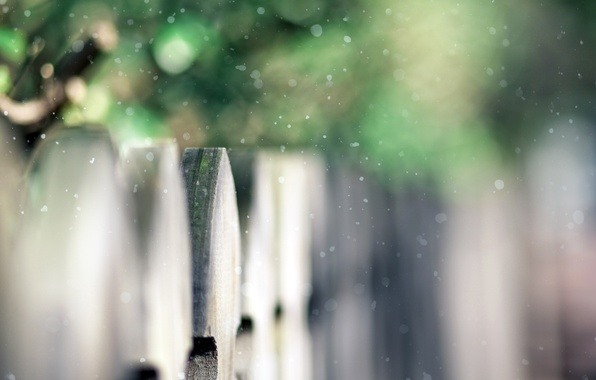 Picture greens, the fence, focus, wooden, the bushes, snow, fence, time of the year, bokeh, snow, …