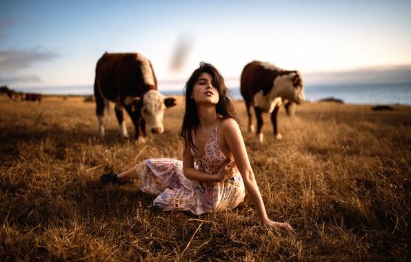 Picture girl, cows, Jesse Duke