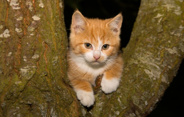Picture look, tree, red, kitty, on the tree, ginger kitten