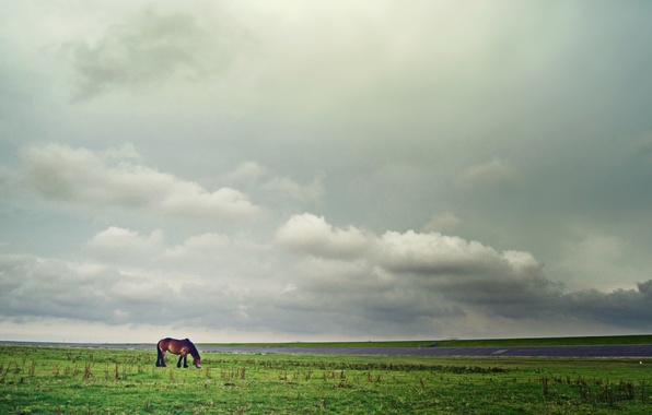 Picture field, the sky, grass, clouds, horse, horizon