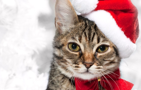 Picture cat, mustache, look, red, holiday, New year, holidays, bow, cat, cap, smoky, New year