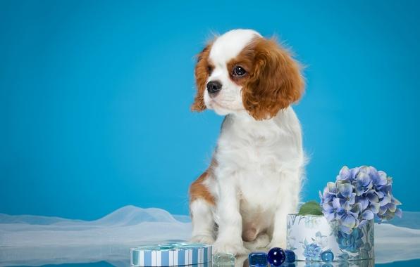 Picture cute, puppy, Spaniel, spotted, hydrangea