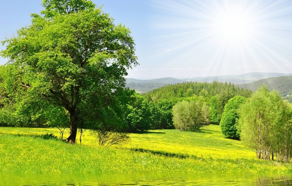 Picture greens, forest, grass, water, the sun, trees, flowers, Nature, meadow
