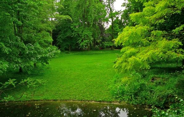 Picture greens, grass, trees, pond, Park, France, lawn, Albert-Kahn Japanese gardens