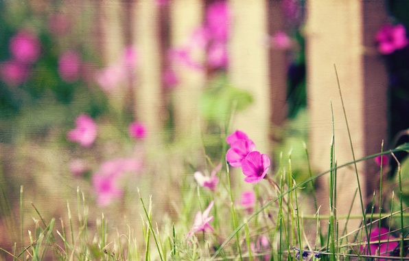 Picture flowers, style, background, the fence