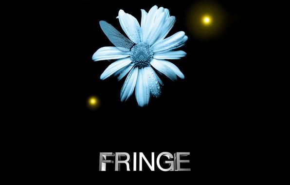 Picture flower, face, fringe, beyond