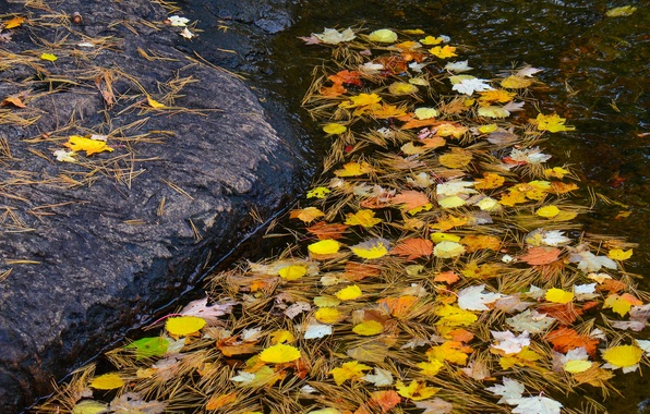 Picture autumn, leaves, water, stream, stone, needles