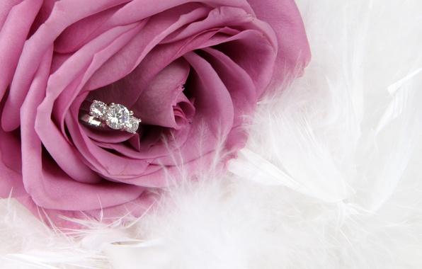 Picture flower, rose, ring, rose, flower, ring