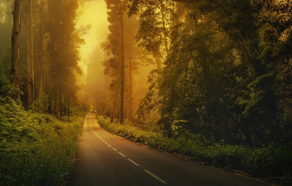 Picture road, machine, forest, grass, trees, fog, markup