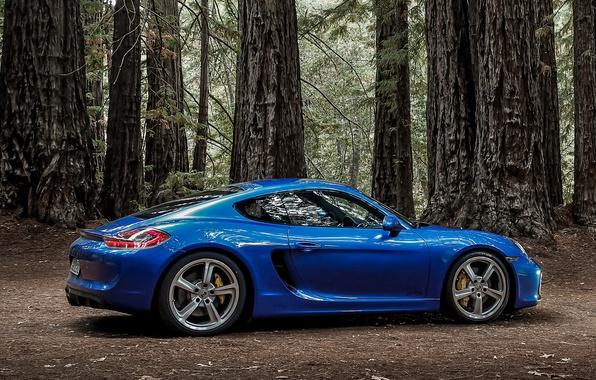 Picture Porsche, Cayman, Porsche, GTS, 2014, Caiman