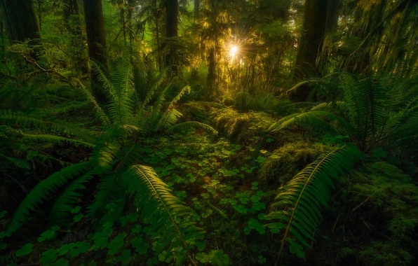 Picture forest, leaves, rays, trees, nature, jungle