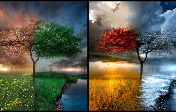 Picture nature, place, tree, seasons, natural beauty