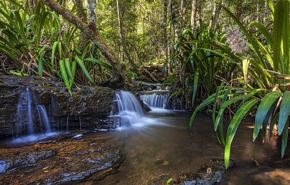 Picture forest, leaves, trees, waterfall, Australia, Queensland
