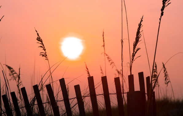 Picture grass, the sun, fog, pink, dawn, the fence, morning, fences