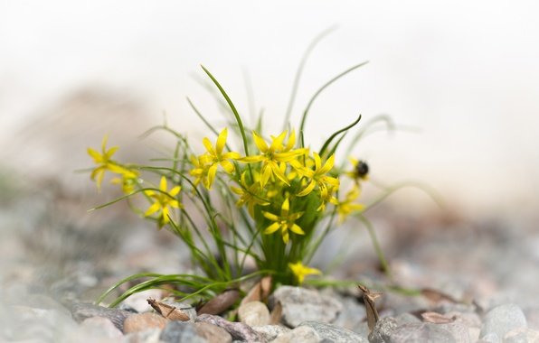 Picture leaves, flowers, stones, yellow, spring