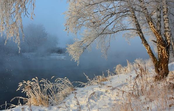 Picture winter, snow, landscape, nature, fog, river, birch