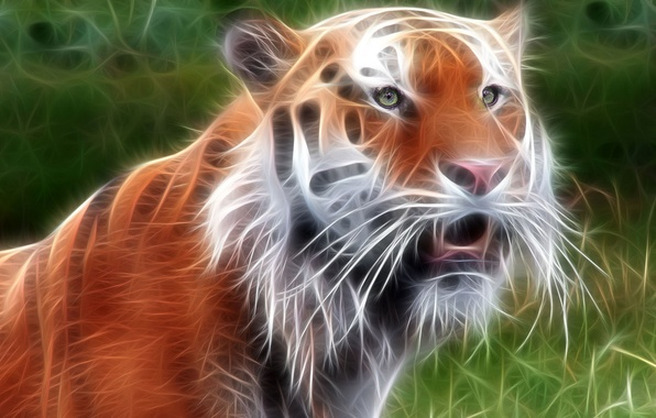 Picture tiger, treatment, beast