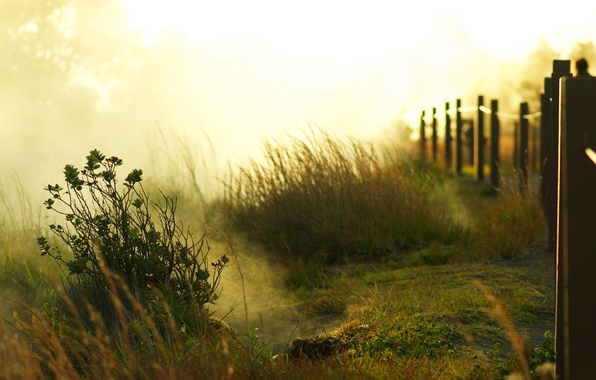 Picture greens, grass, the sun, light, trees, fog, dawn, the fence, morning, fence, bushes, place