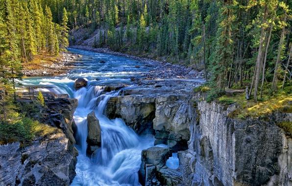 Picture forest, trees, river, rocks, waterfall, Canada, Canada, Jasper National Park, Sunwapta Falls, Sunwapta River