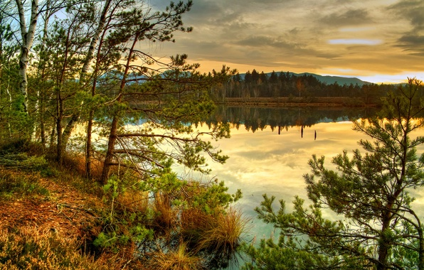 Picture autumn, forest, grass, clouds, trees, sunset, nature, lake, spruce, needles, dry, lo and behold
