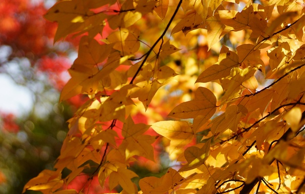 Picture autumn, leaves, tree, foliage, yellow, crown