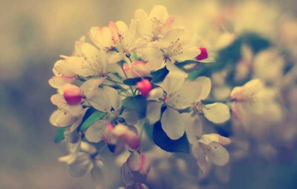 Picture macro, flowers, nature, photo, background, Wallpaper, plants, branch, spring, buds, flowering