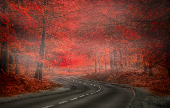 Picture Red, Road, Fog, Forest, Leaves, Nature. Beauty