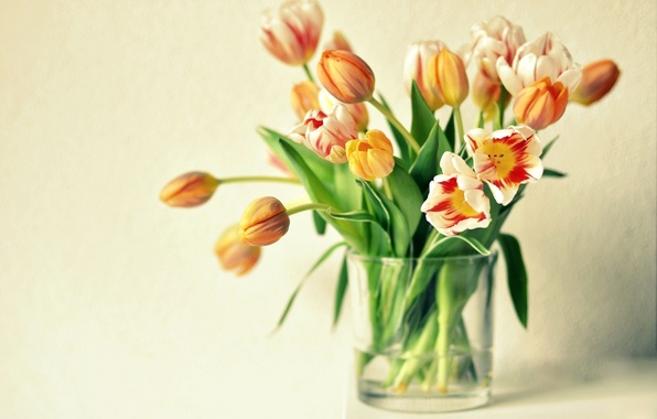 Picture flowers, tulips, vase, orange