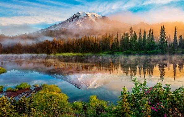 Picture forest, summer, reflection, fog, lake, mountain, morning, USA, Washington, Mount Rainier, Rainier, The cascade mountains, …