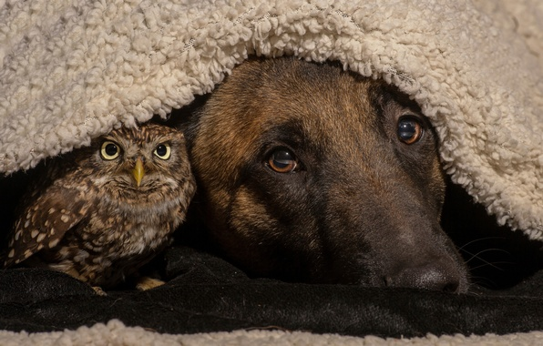 Picture owl, bird, dog, friends