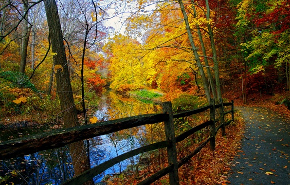 Picture forest, trees, landscape, Nature, forest, river, trees, landscape, nature, park, autumn, view, scenery, autumn, fall