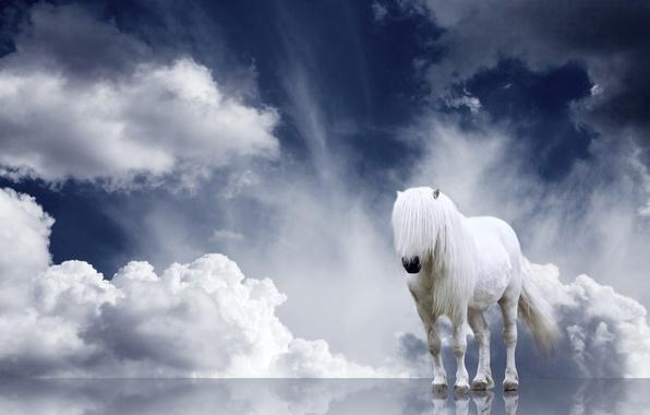 Picture clouds, horse, mane