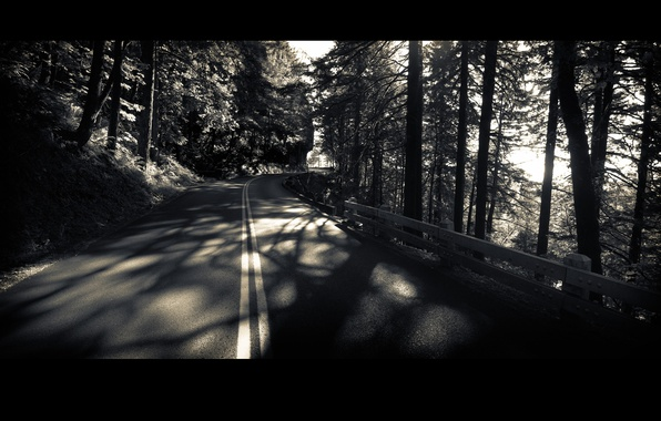 Picture road, forest, trees, black and white