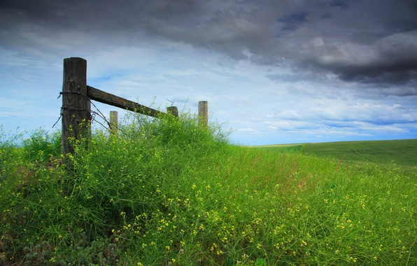 Picture the sky, grass, clouds, the fence