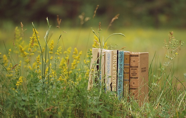 Picture greens, summer, grass, nature, mood, glade, books, plants, reading