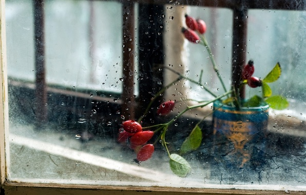 Picture glass, flowers, background, window