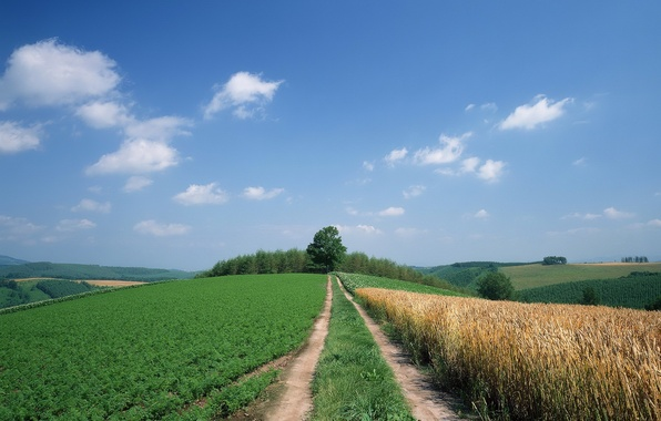 Picture road, field, the sky, clouds, trees, hills